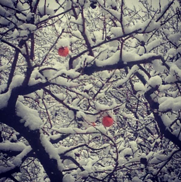 西林寺に雪
